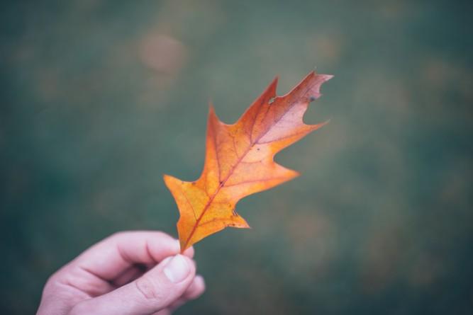 Brilliant leaf