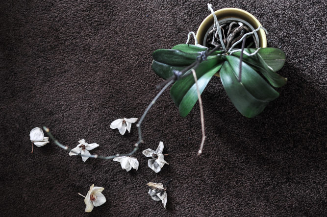 Orchid on carpet